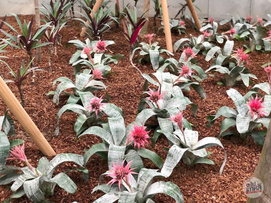 พืชในโซน Tropical เขตร้อน